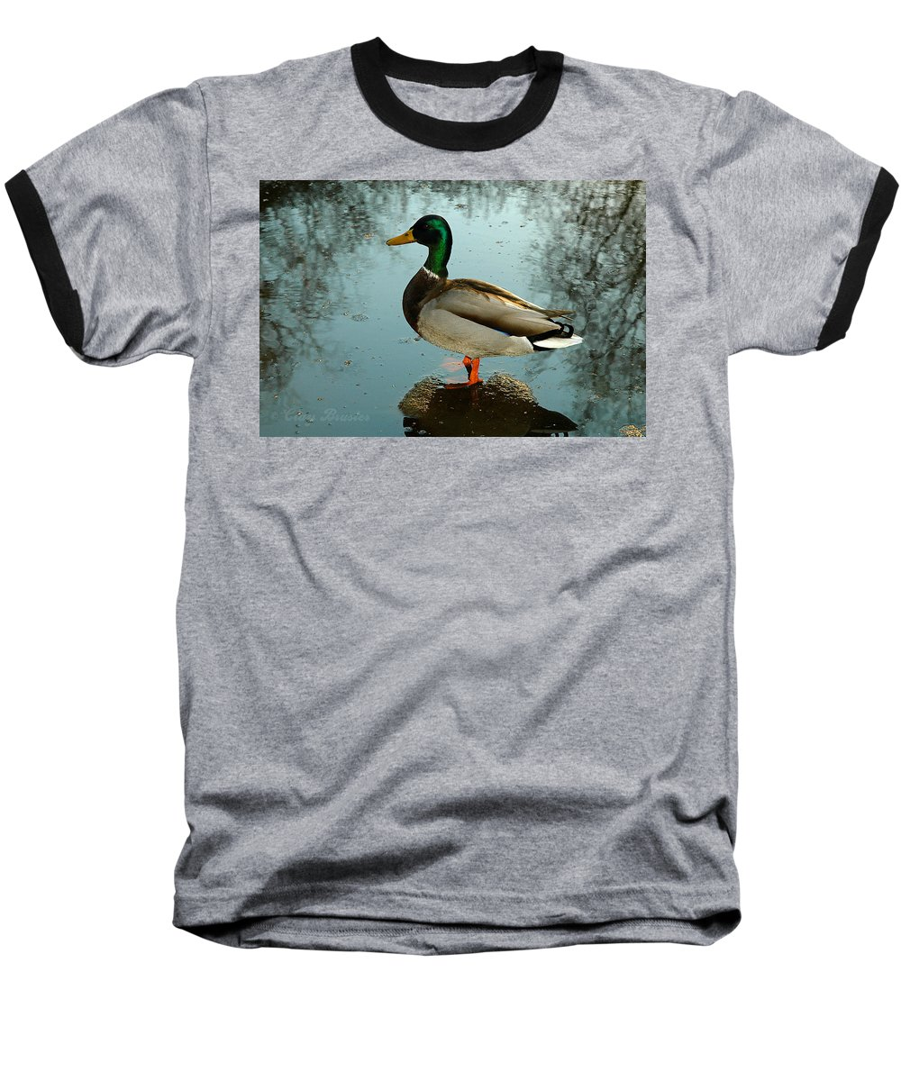 Clay Baseball T-Shirt featuring the photograph Mallard by Clayton Bruster