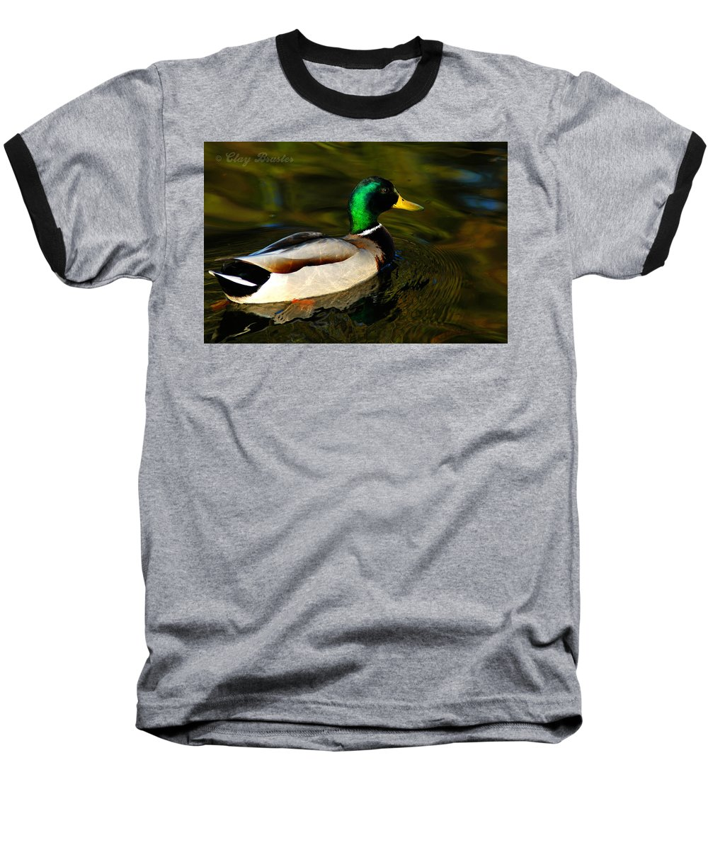 Clay Baseball T-Shirt featuring the photograph Mallard Green by Clayton Bruster
