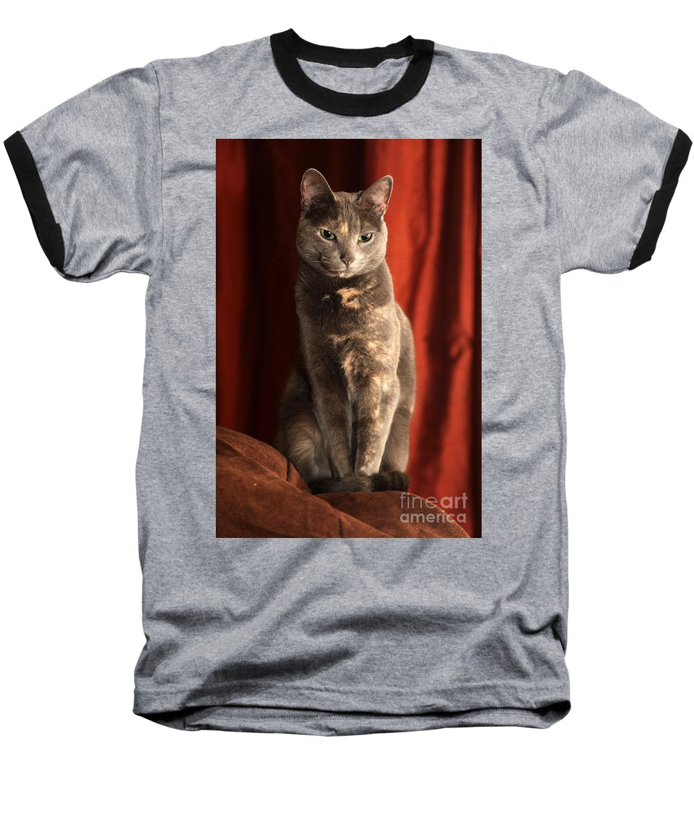 Cat Baseball T-Shirt featuring the photograph Mollie by Amanda Barcon