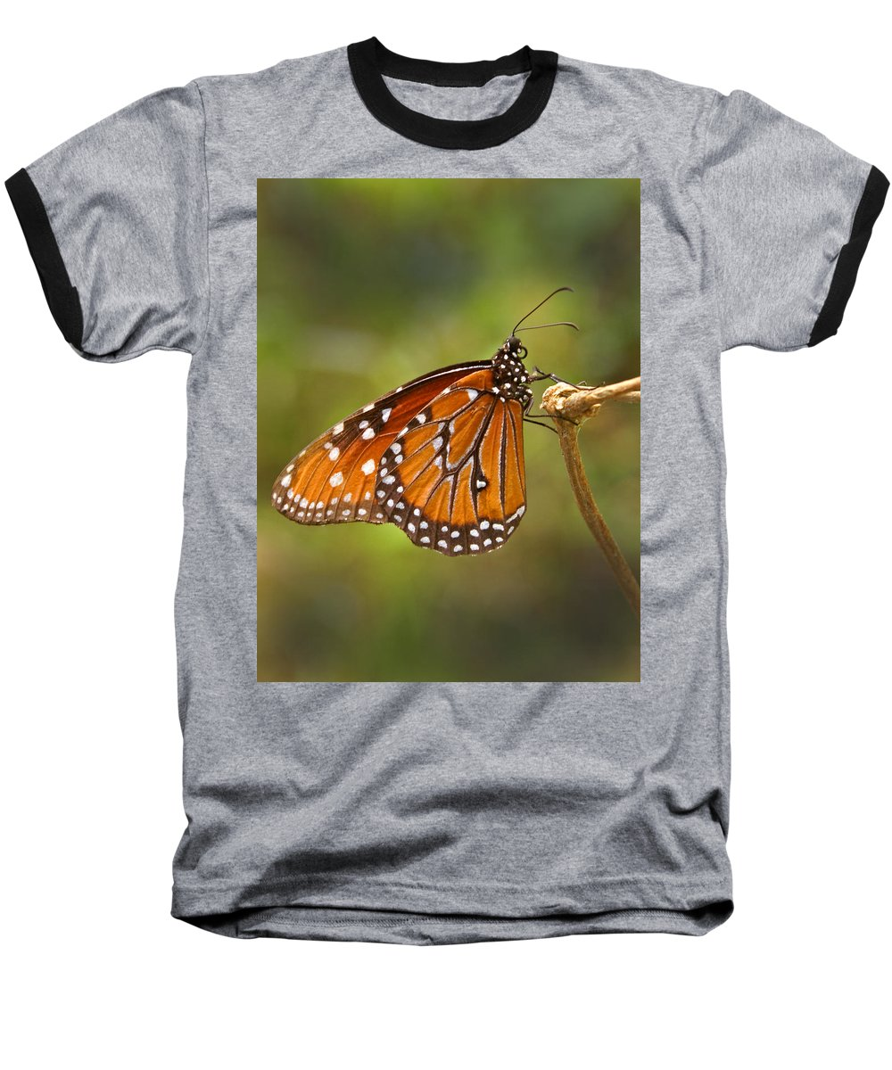 Monarch Baseball T-Shirt featuring the photograph Monarch Butterfly by Heather Coen