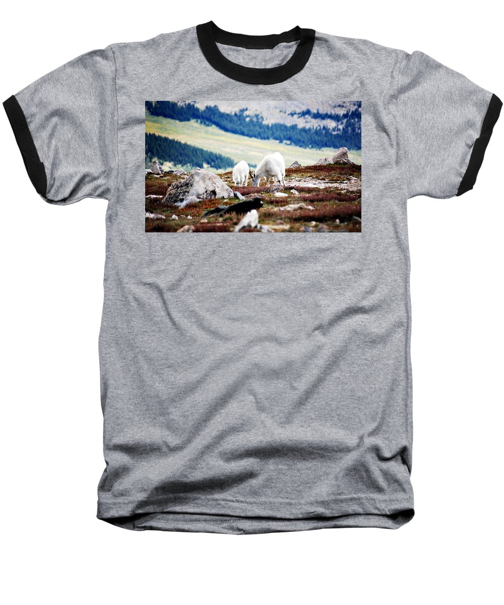 Animal Baseball T-Shirt featuring the photograph Mountain Goats 2 by Marilyn Hunt