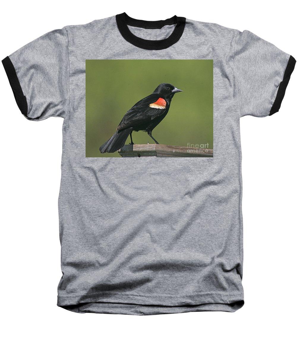 Bird Baseball T-Shirt featuring the photograph Mr Blck Bird by Robert Pearson