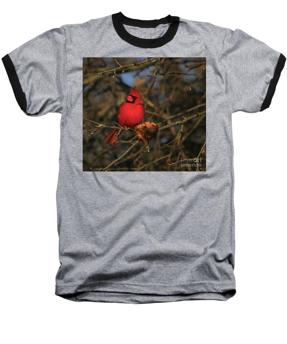 Bird Baseball T-Shirt featuring the photograph Out On A Limb by Robert Pearson