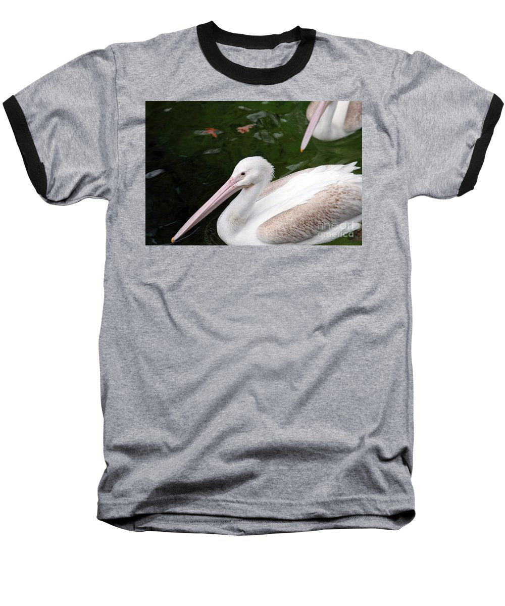 Pelican Baseball T-Shirt featuring the photograph Pelican by Amanda Barcon