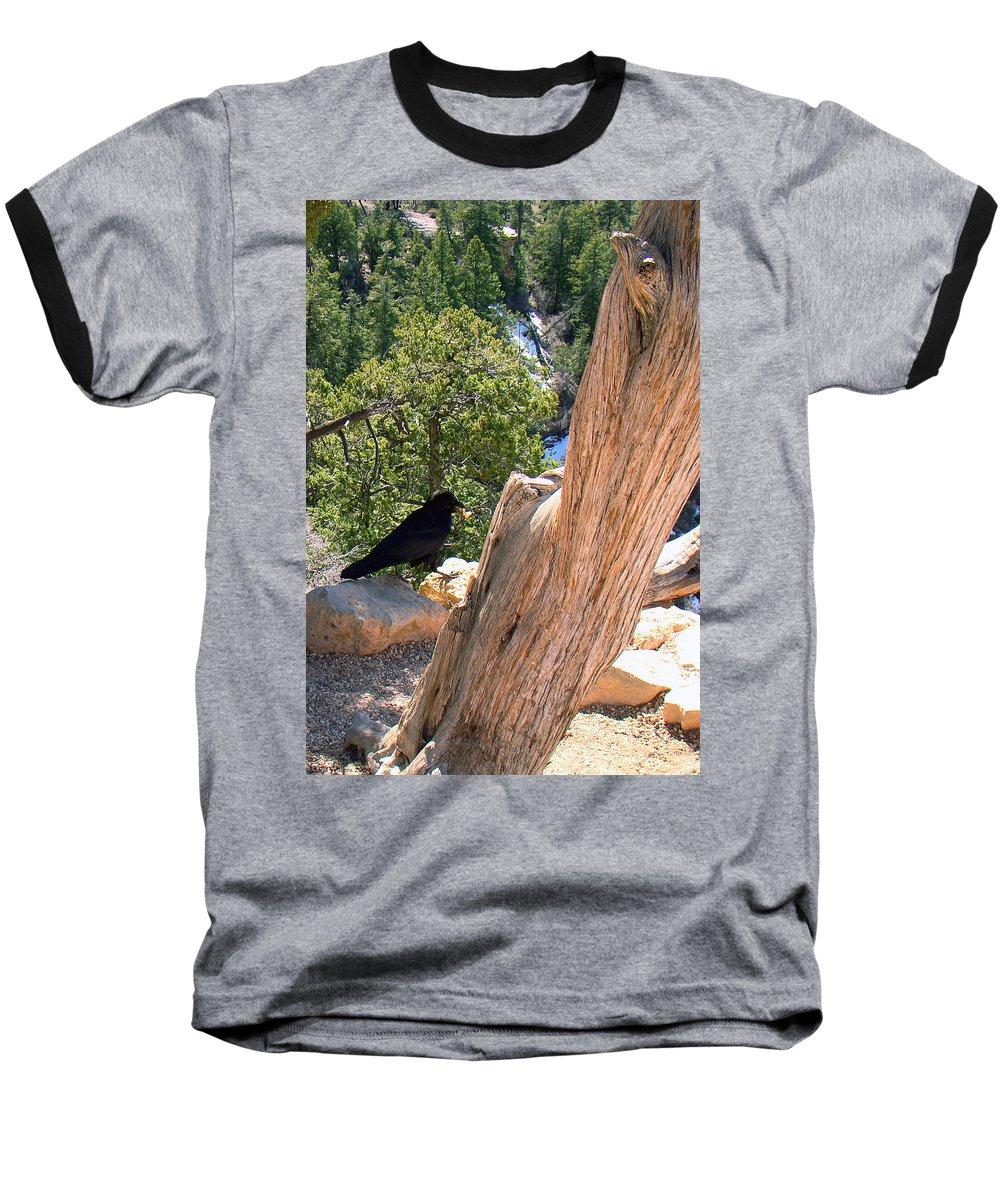Grand Canyon Baseball T-Shirt featuring the photograph Petrified Raven At Grand Canyon by Merja Waters