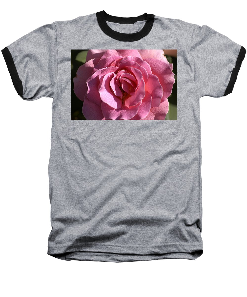 Clay Baseball T-Shirt featuring the photograph Pink Rose by Clayton Bruster