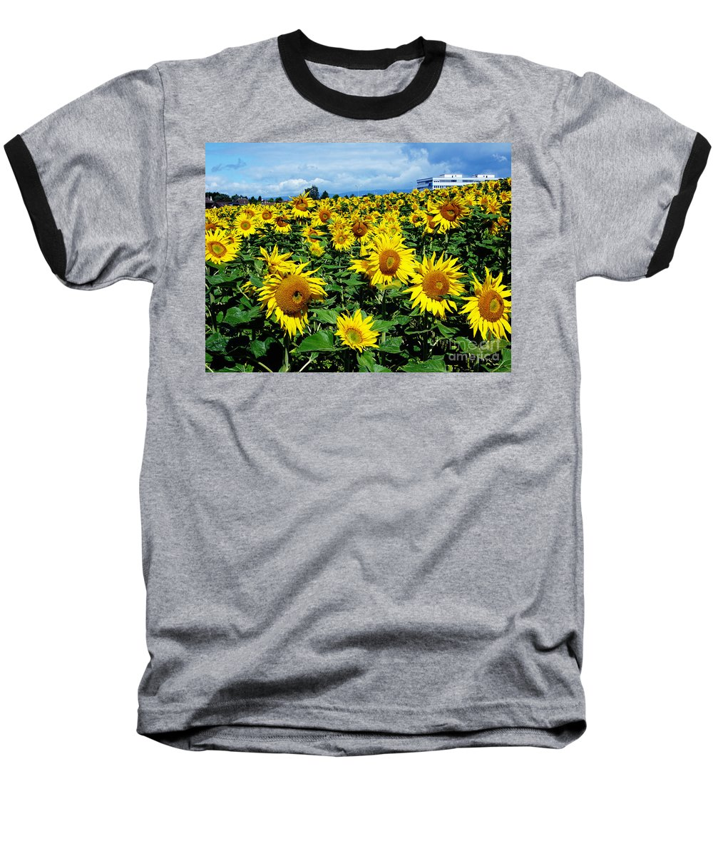 Sunflowers Baseball T-Shirt featuring the photograph Pleasant Warmth by Jeff Barrett