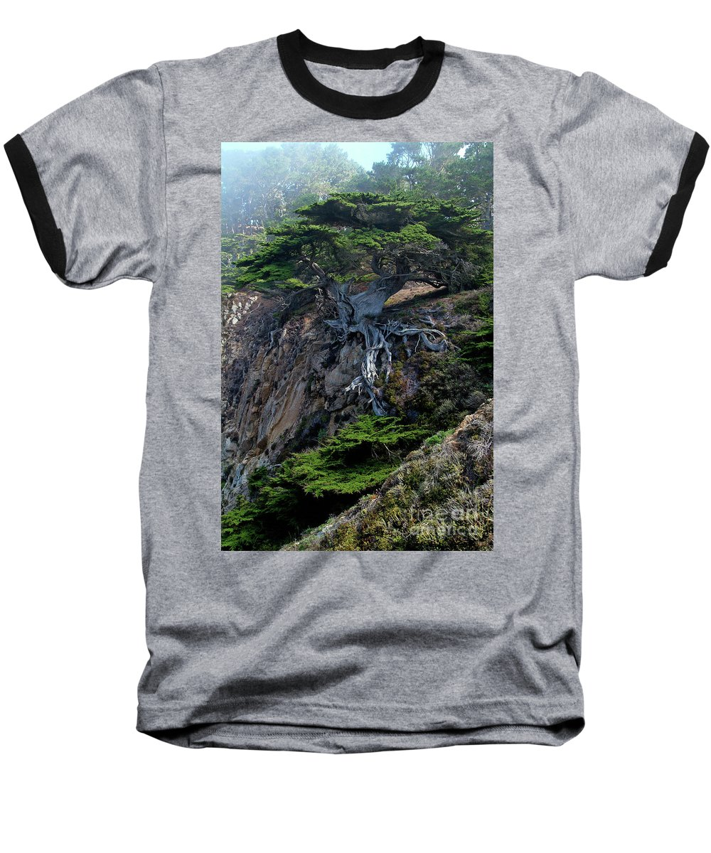 Landscape Baseball T-Shirt featuring the photograph Point Lobos Veteran Cypress Tree by Charlene Mitchell