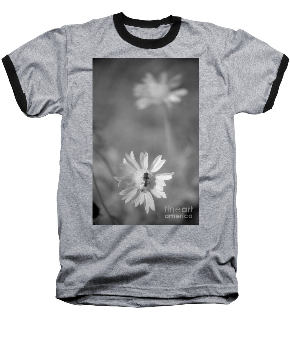 Pollinate Baseball T-Shirt featuring the photograph Pollination by Richard Rizzo