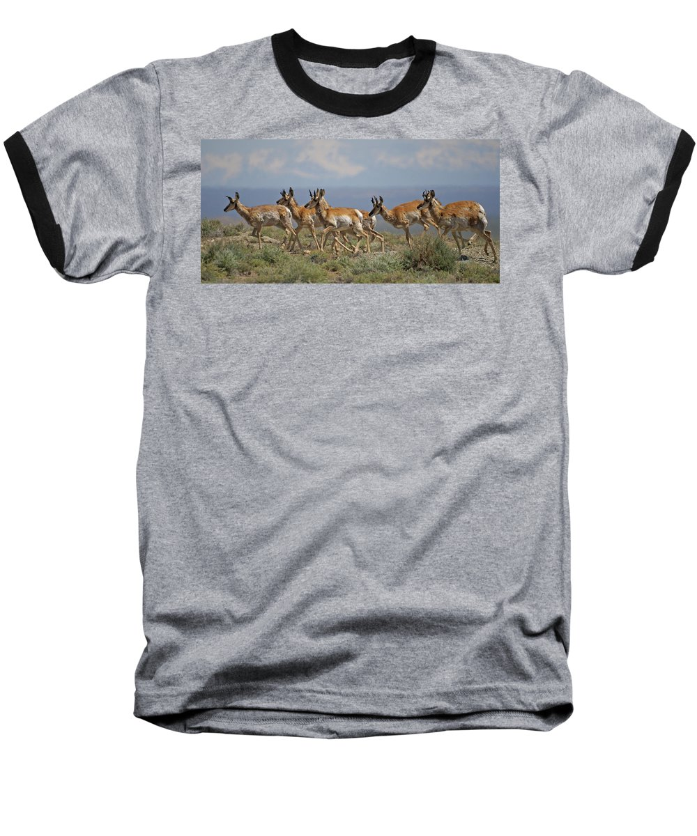 Pronghorn Baseball T-Shirt featuring the photograph Pronghorn Antelope Running by Heather Coen