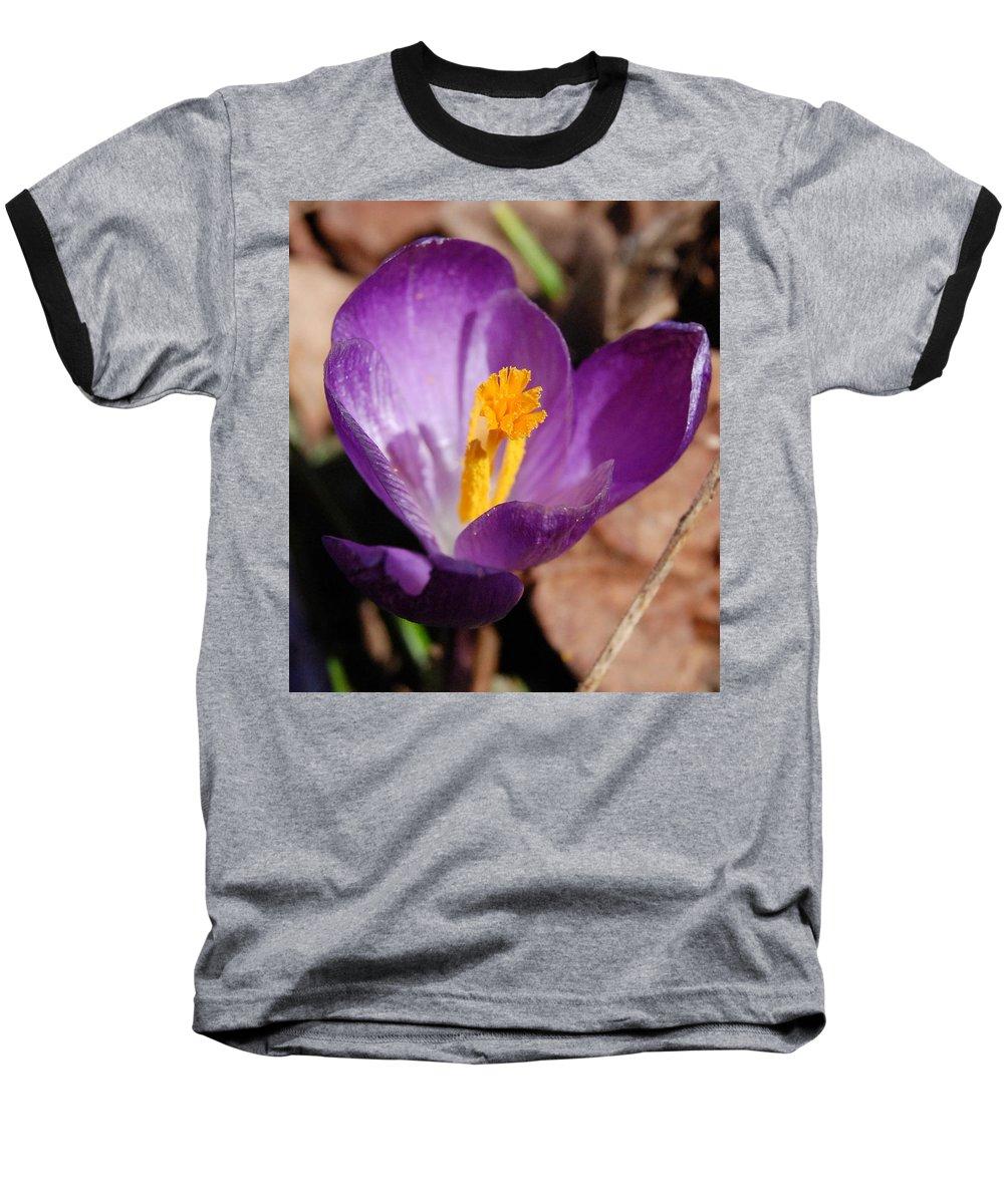 Digital Photography Baseball T-Shirt featuring the photograph Purple Crocus by David Lane