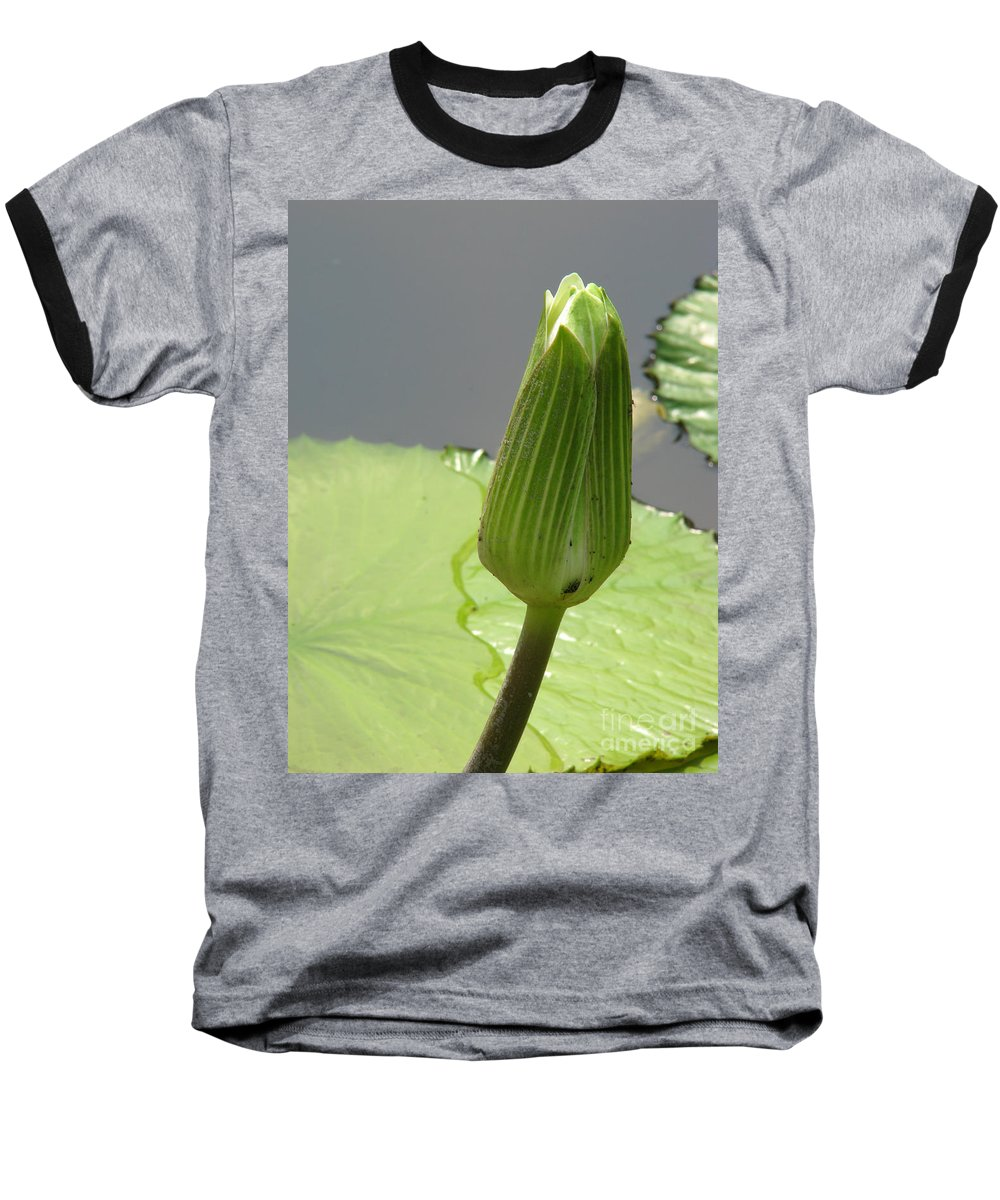 Lilly Baseball T-Shirt featuring the photograph Ready To Bloom by Amanda Barcon