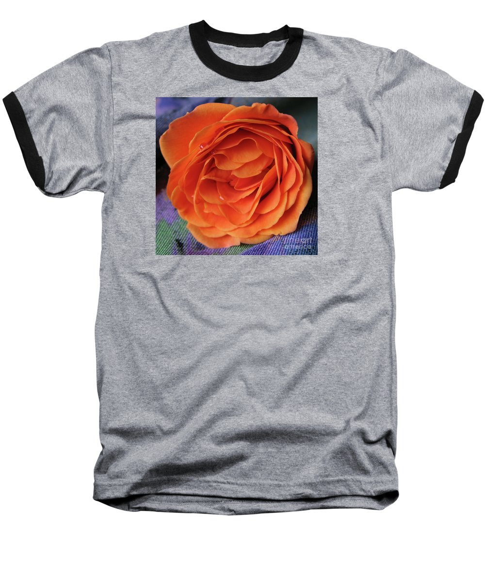 Rose Baseball T-Shirt featuring the photograph Really Orange Rose by Ann Horn