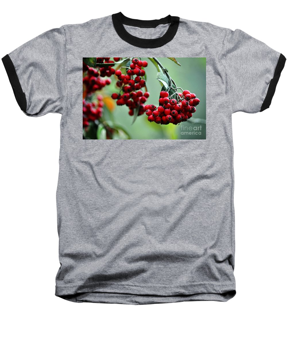Clay Baseball T-Shirt featuring the photograph Red Berries by Clayton Bruster