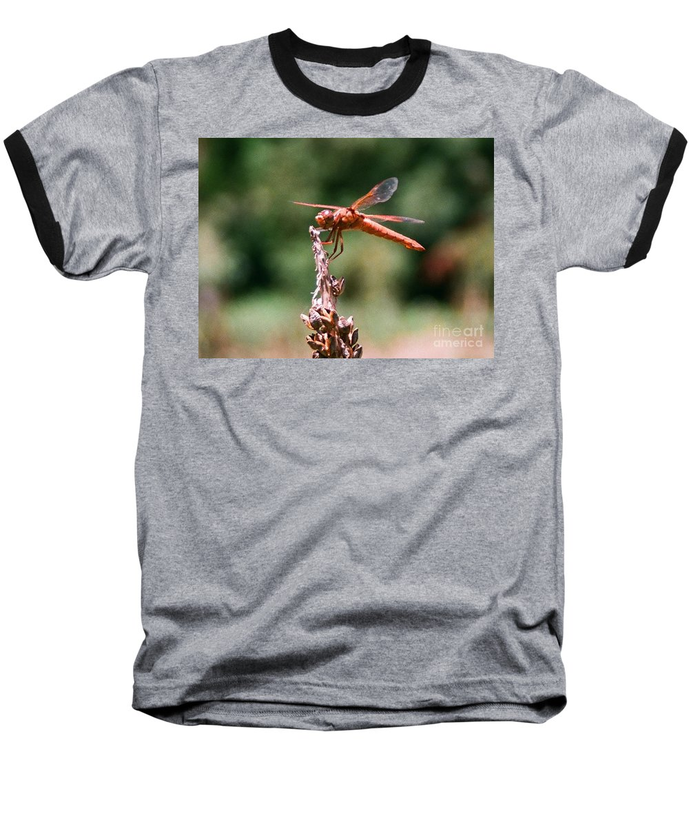Dragonfly Baseball T-Shirt featuring the photograph Red Dragonfly II by Dean Triolo