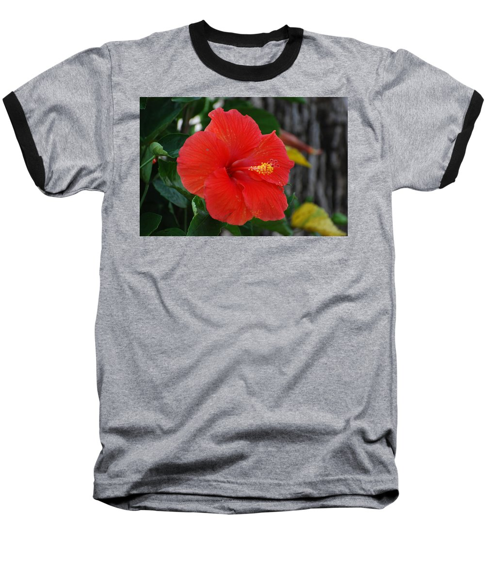 Flowers Baseball T-Shirt featuring the photograph Red Flower by Rob Hans