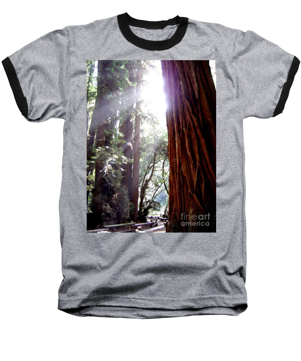 Redwoods Baseball T-Shirt featuring the photograph Redwood Sunlight by Mary Rogers