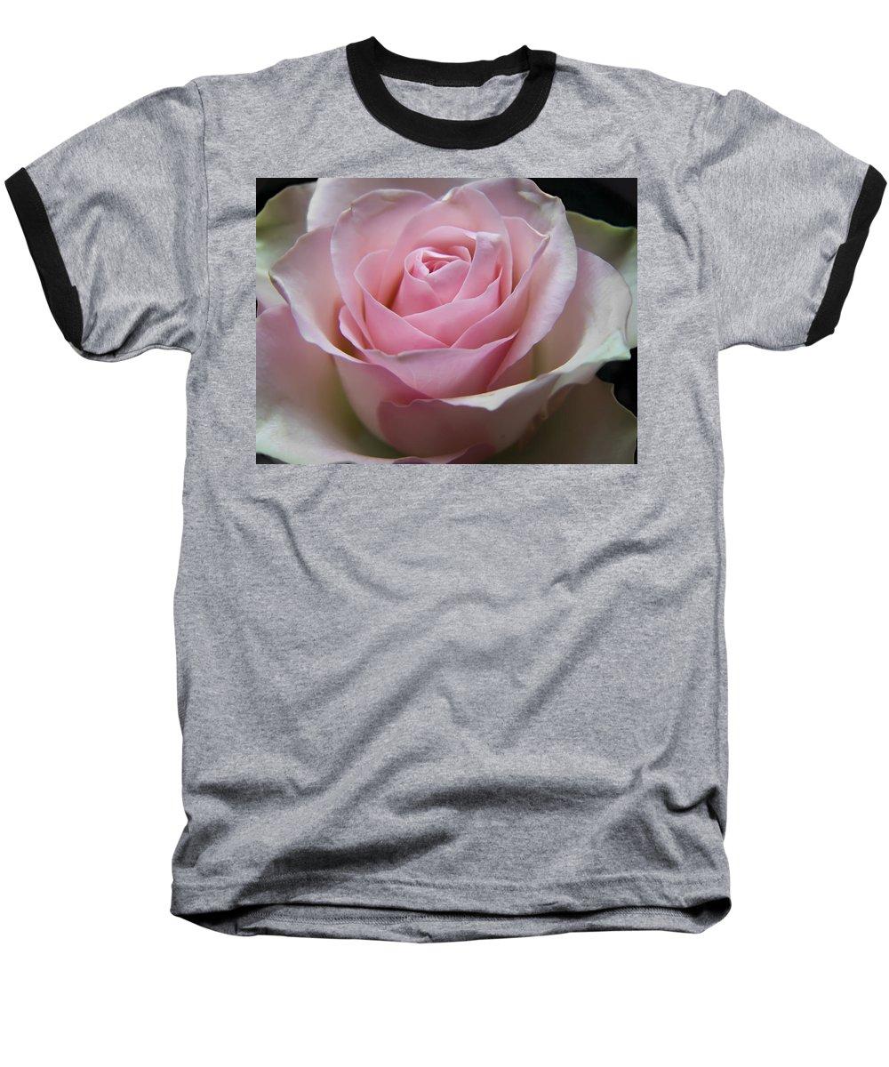 Rose Baseball T-Shirt featuring the photograph Rose by Daniel Csoka