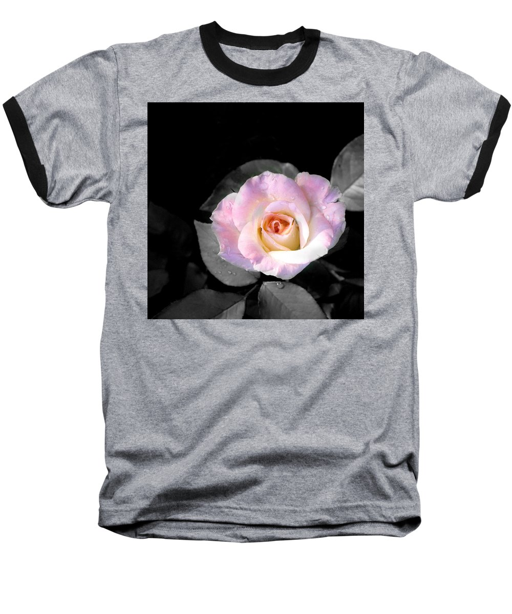 Princess Diana Rose Baseball T-Shirt featuring the photograph Rose Emergance by Steve Karol