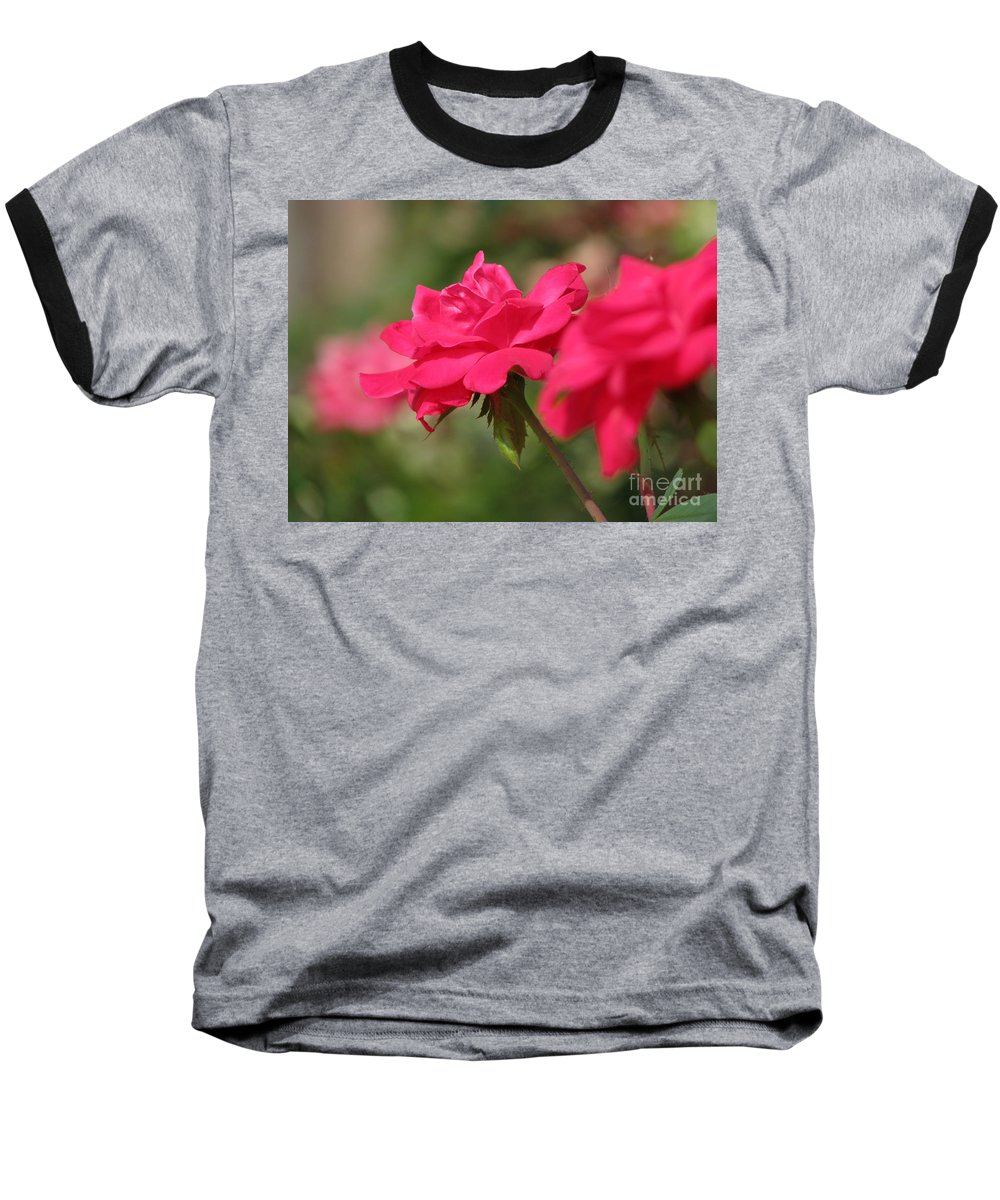 Rose Baseball T-Shirt featuring the photograph Roses by Amanda Barcon