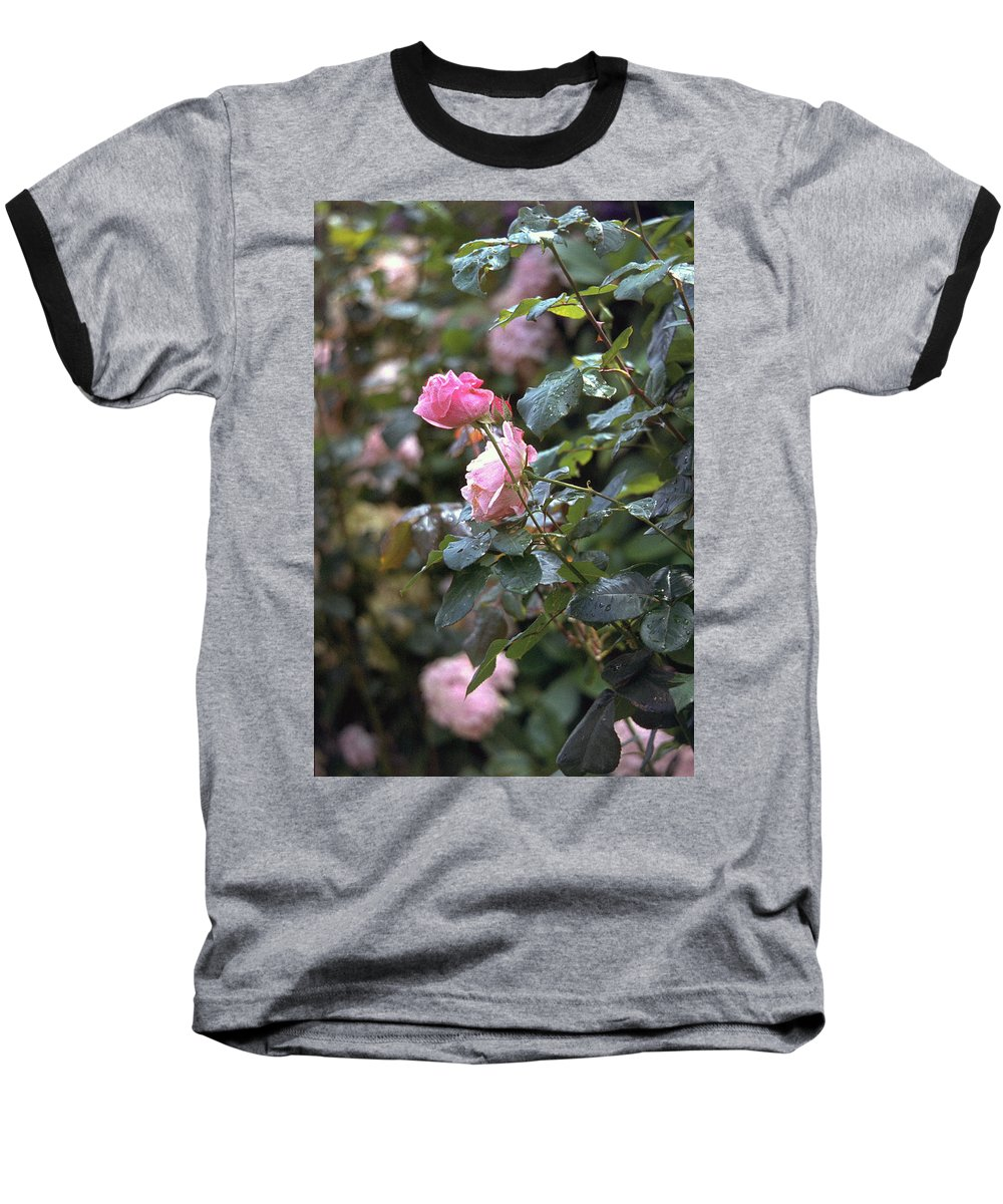 Roses Baseball T-Shirt featuring the photograph Roses by Flavia Westerwelle