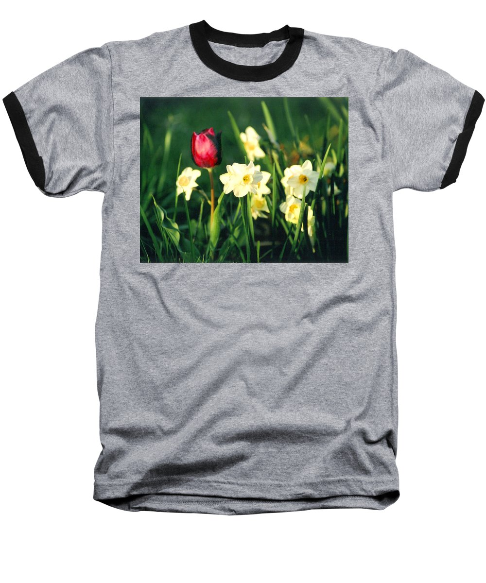 Tulips Baseball T-Shirt featuring the photograph Royal Spring by Steve Karol