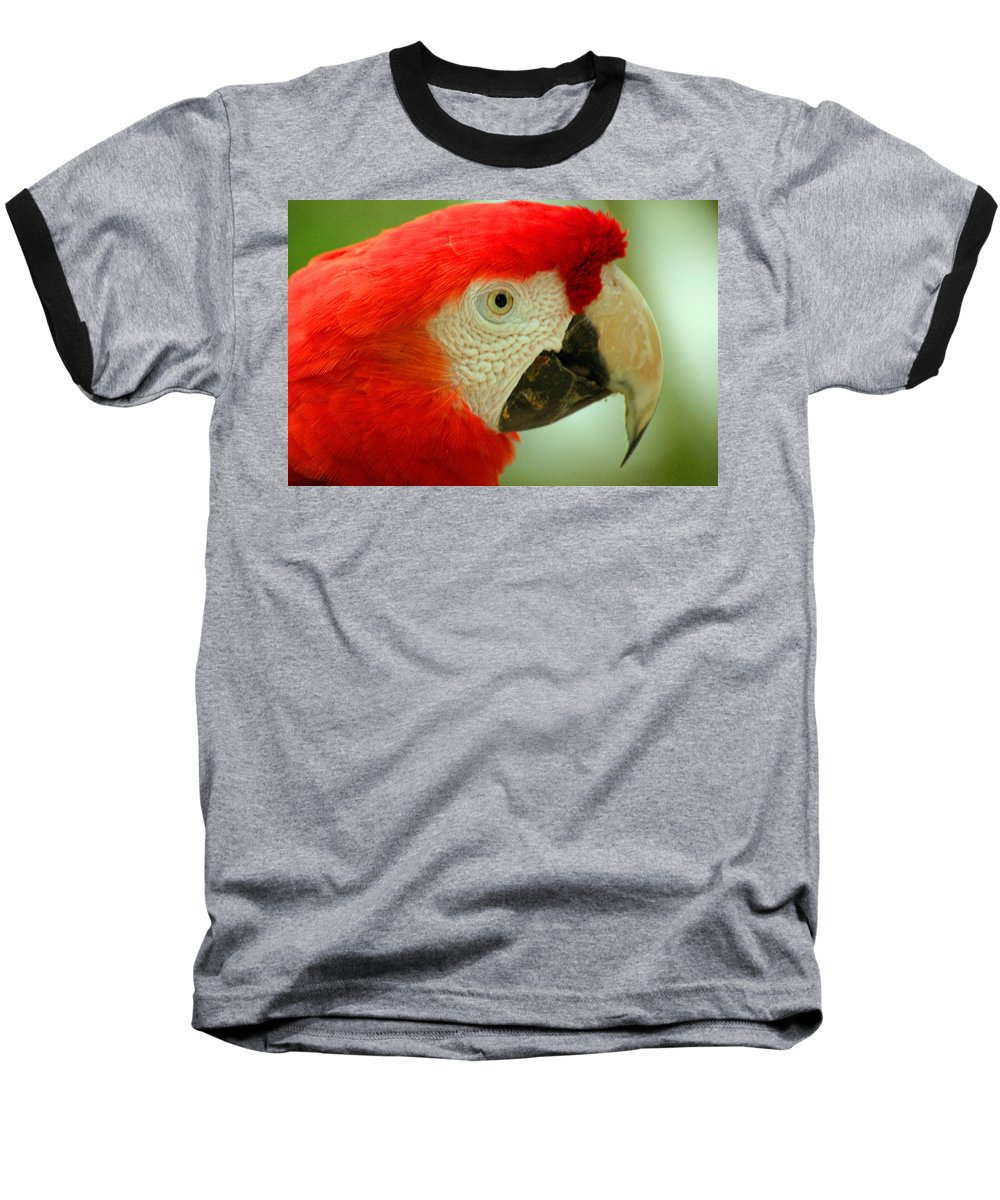 Parrot Baseball T-Shirt featuring the photograph Scarlett Macaw South America by Ralph A Ledergerber-Photography