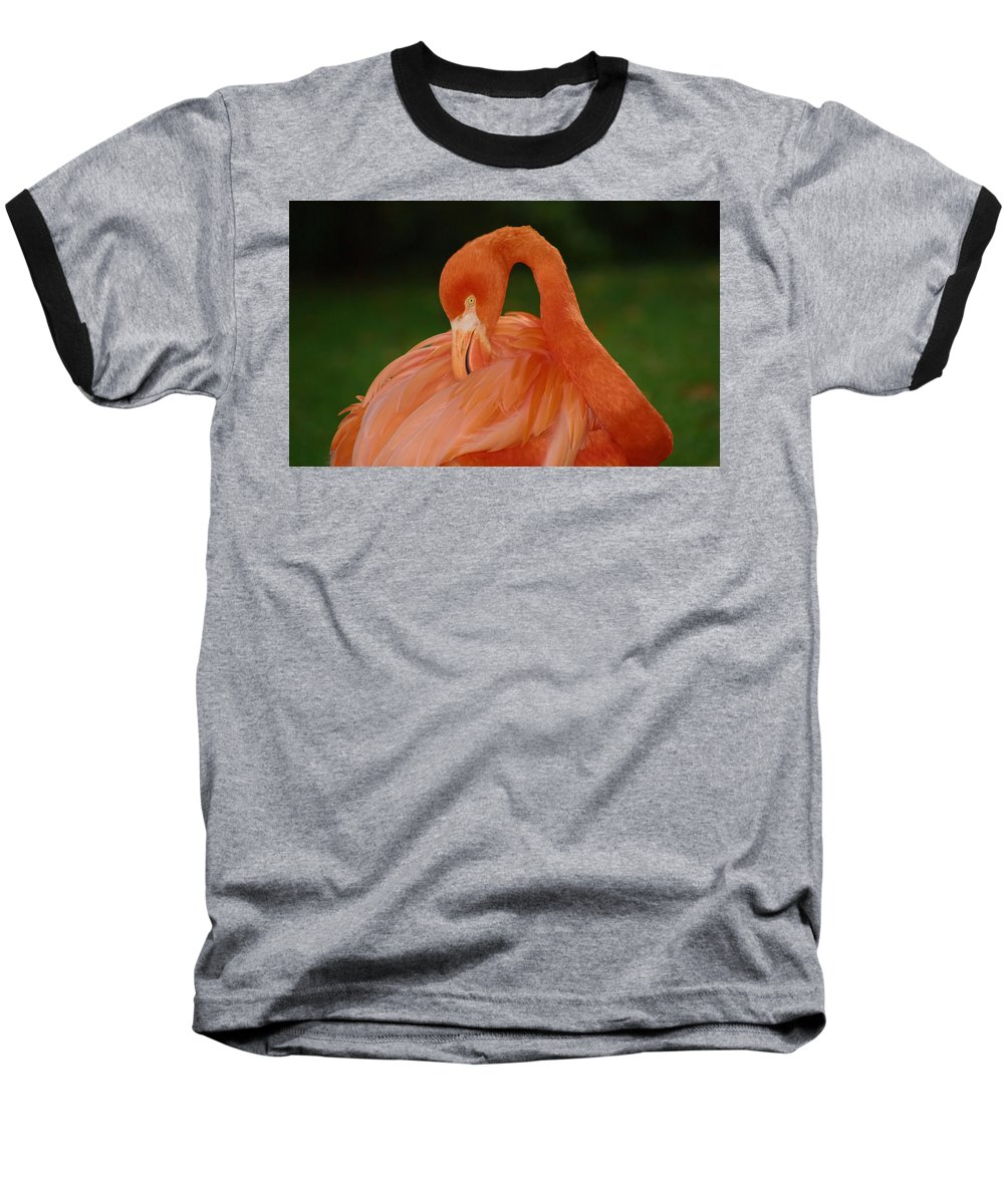 Flamingo Baseball T-Shirt featuring the photograph shy by Gaby Swanson