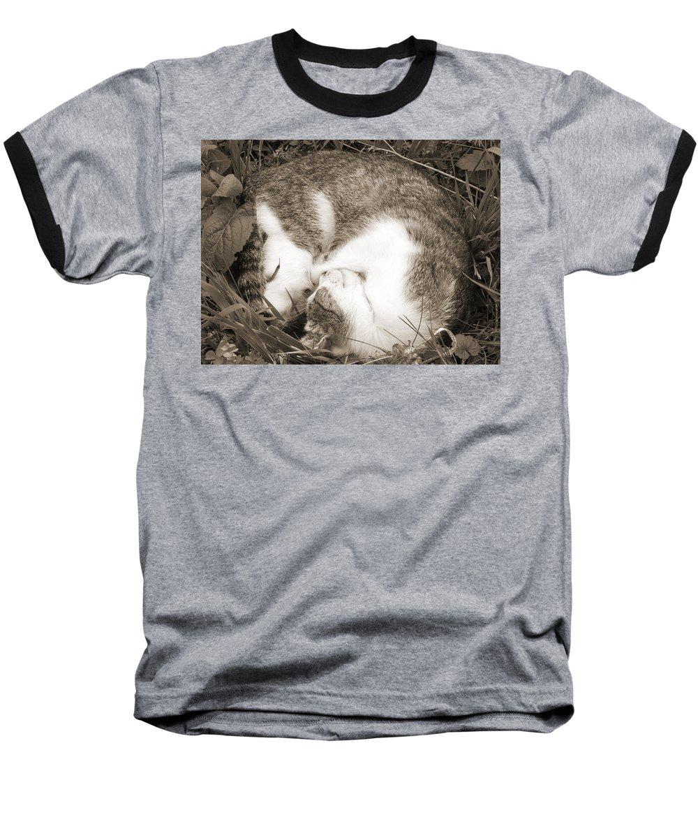 Pets Baseball T-Shirt featuring the photograph Sleeping by Daniel Csoka