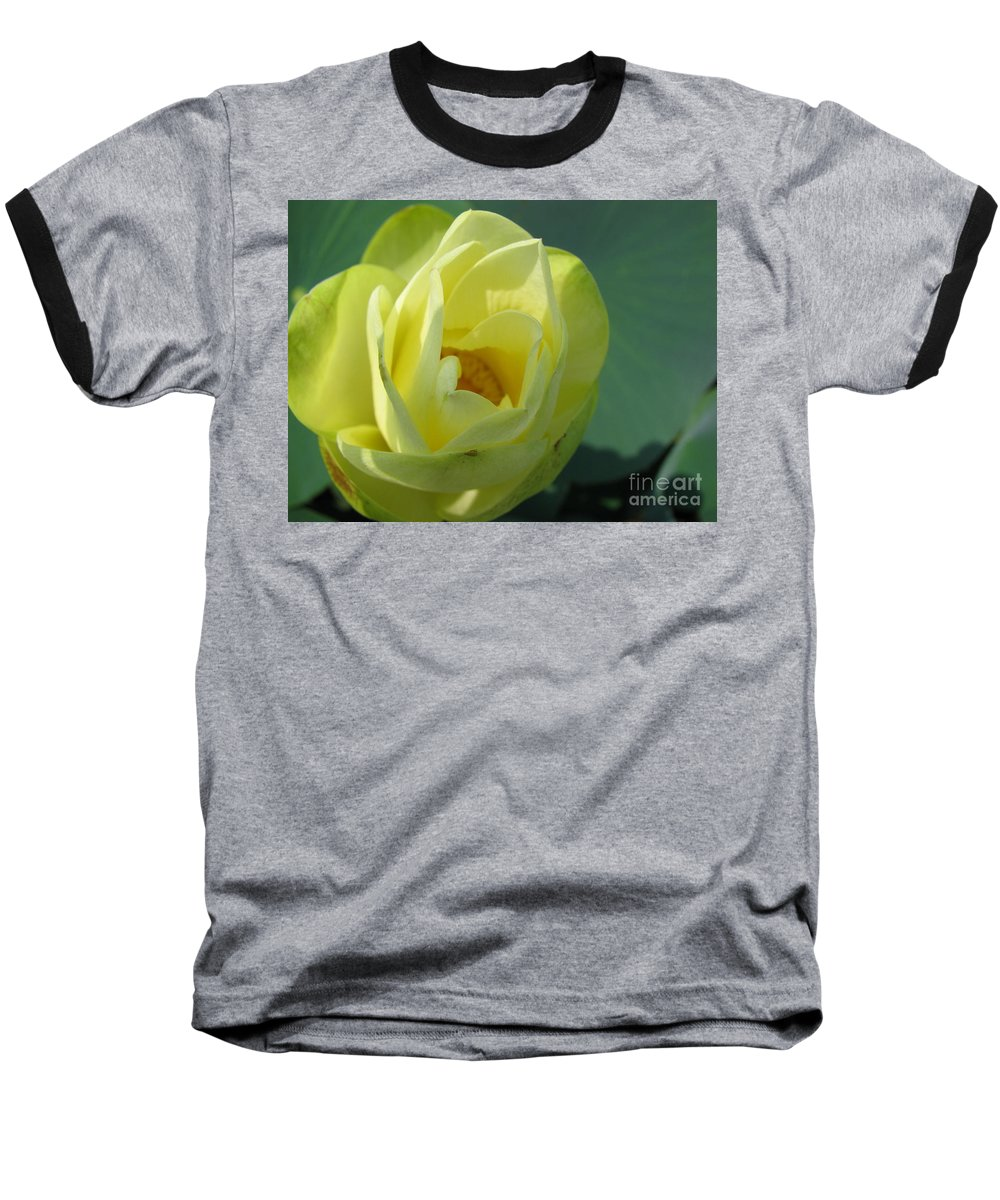 Lotus Baseball T-Shirt featuring the photograph Softly by Amanda Barcon