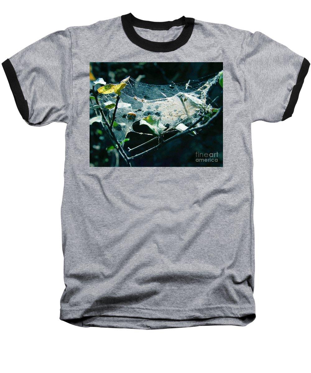 Spider Baseball T-Shirt featuring the photograph Spider Web by Peter Piatt