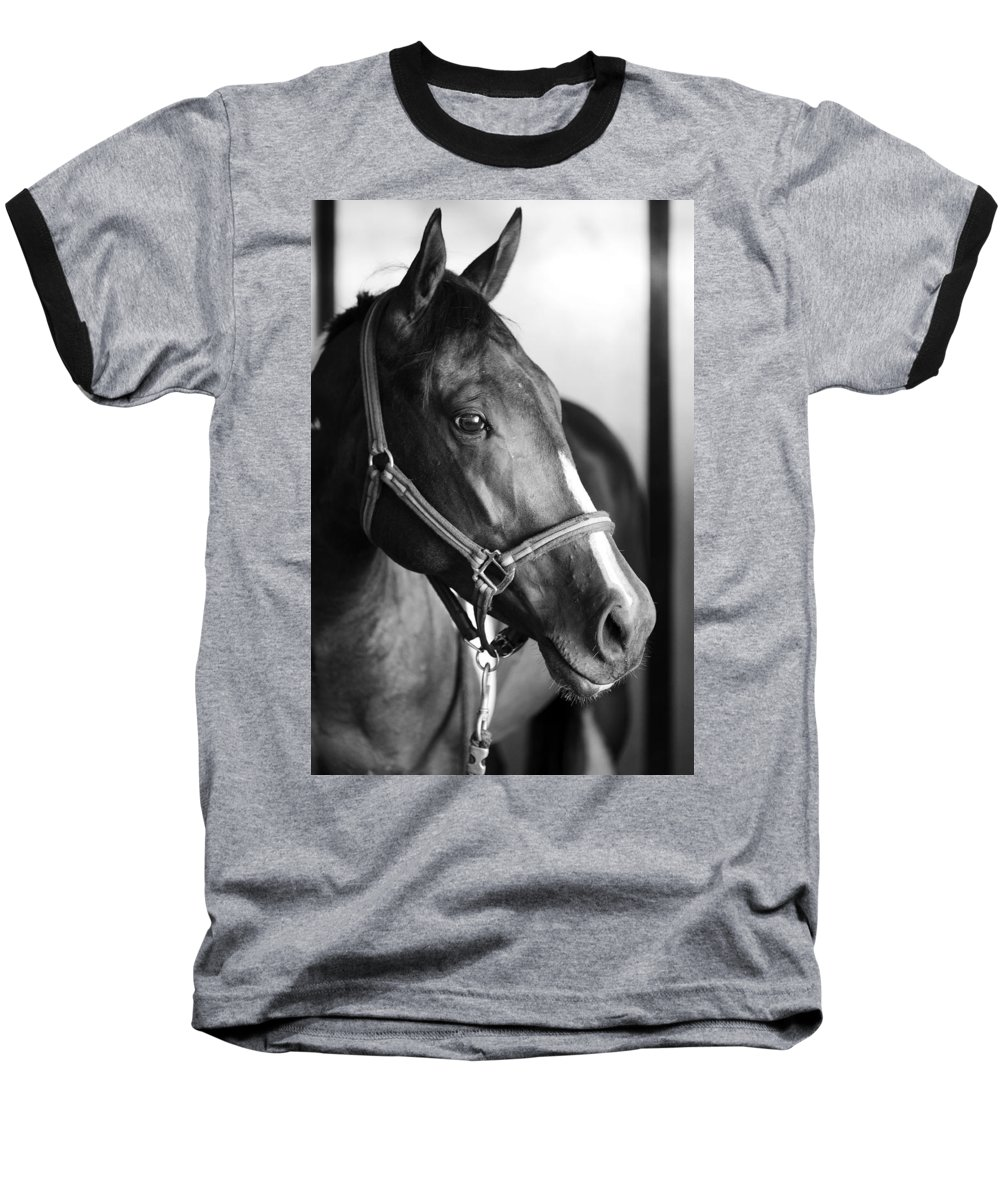 Horse Baseball T-Shirt featuring the photograph Horse And Stillness by Marilyn Hunt
