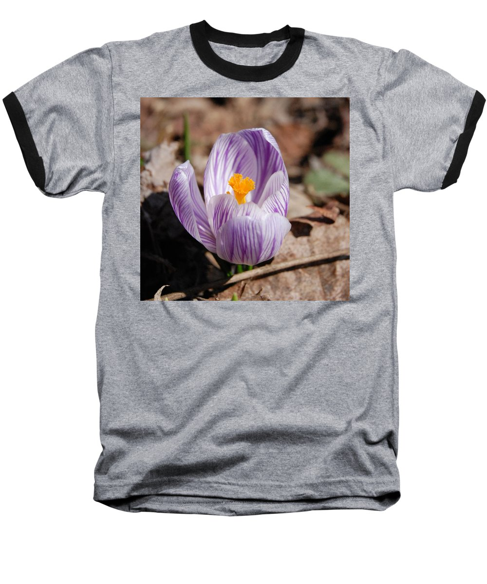 Digital Photography Baseball T-Shirt featuring the photograph Striped Crocus by David Lane