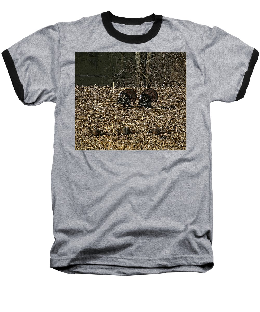 Turkey Baseball T-Shirt featuring the photograph Strutin For The Ladies by Robert Pearson