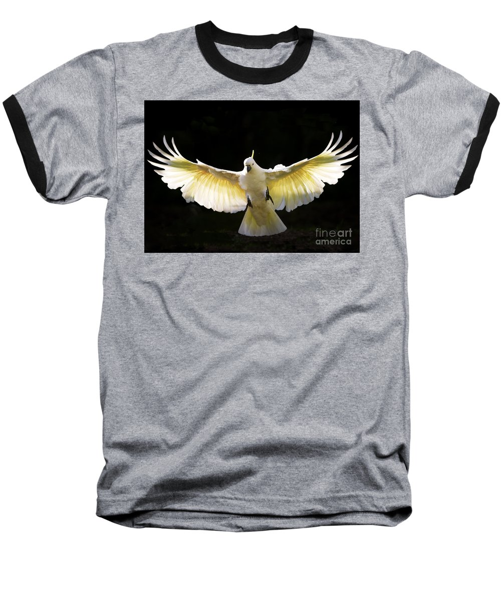 Sulphur Crested Cockatoo Australian Wildlife Baseball T-Shirt featuring the photograph Sulphur Crested Cockatoo In Flight by Sheila Smart Fine Art Photography