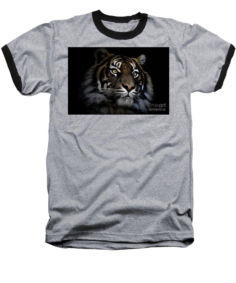 Sumatran Tiger Wildlife Endangered Baseball T-Shirt featuring the photograph Sumatran Tiger by Sheila Smart Fine Art Photography