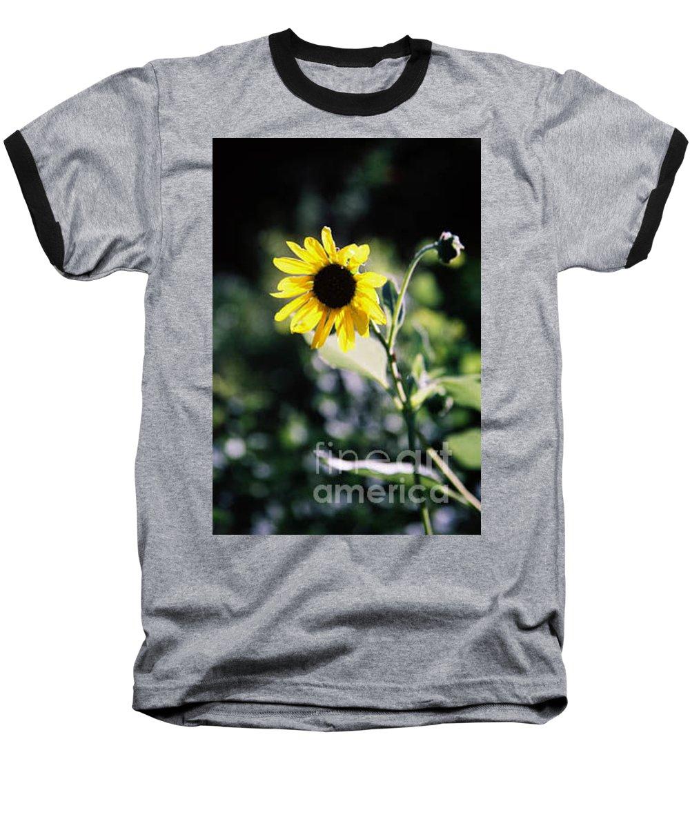 Sunflower Baseball T-Shirt featuring the photograph Summer Sunshine by Kathy McClure