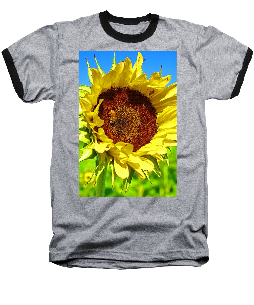 Pastoral Baseball T-Shirt featuring the photograph Sunflower And Bee by Heather Coen