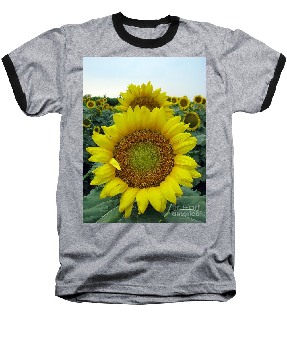 Sunflowers Baseball T-Shirt featuring the photograph Sunflowers by Amanda Barcon