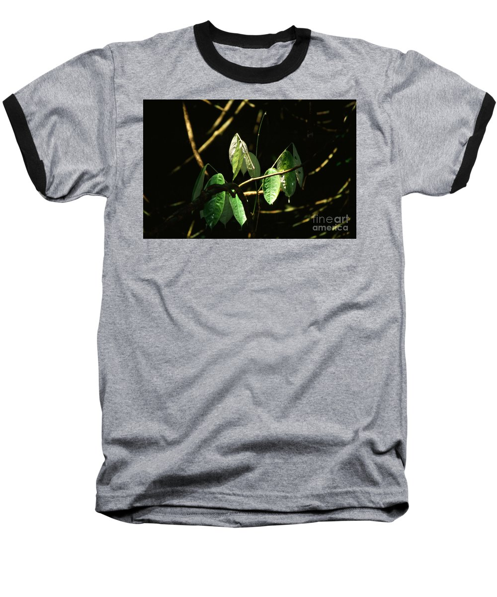 Leaves Baseball T-Shirt featuring the photograph Sunlit Leaves by Kathy McClure