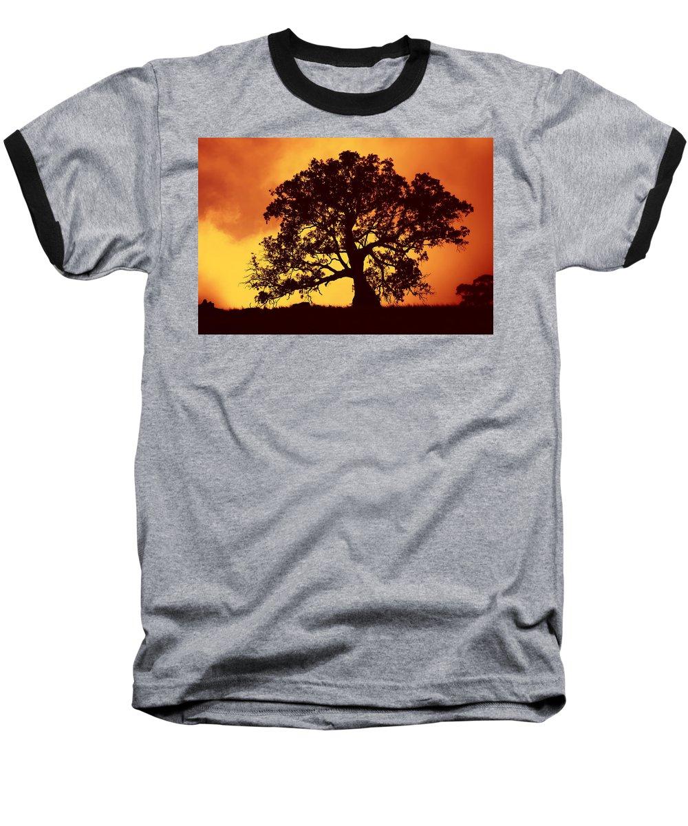 Gum Tree Baseball T-Shirt featuring the photograph Sunrise Gum by Mike Dawson