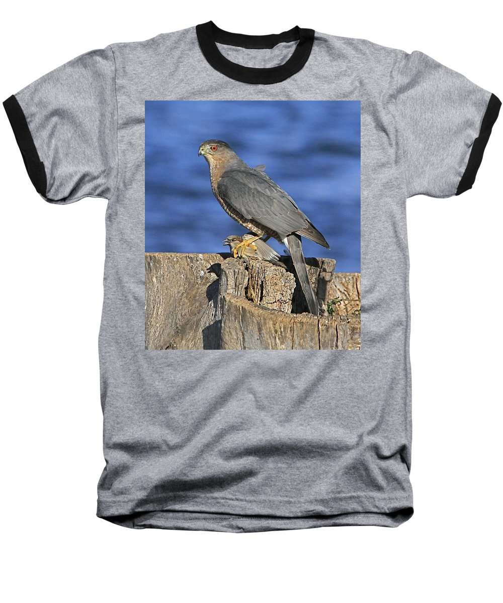 Cooper Baseball T-Shirt featuring the photograph The Catch by Robert Pearson