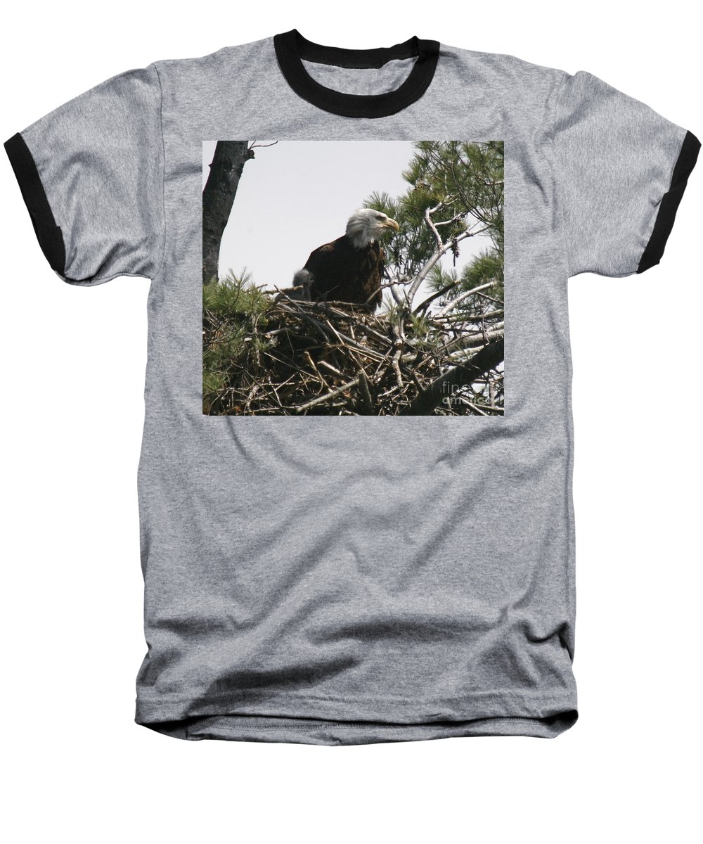 Eagle Baseball T-Shirt featuring the photograph The Eagle Eye by Robert Pearson