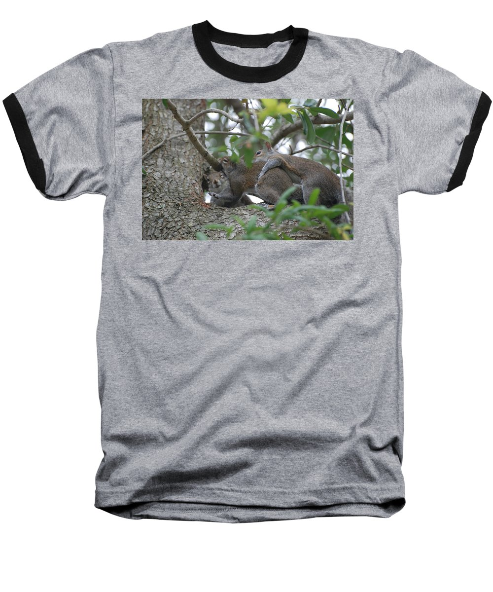 Squirrels Baseball T-Shirt featuring the photograph The Fight For Life by Rob Hans