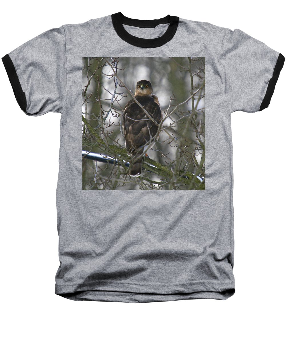 Bird Baseball T-Shirt featuring the photograph The Hawks Have Eyes by Robert Pearson