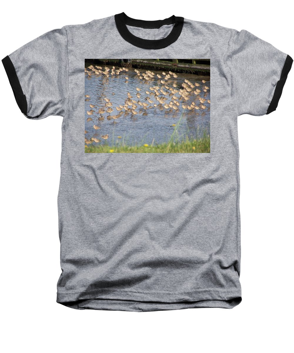 Seabirds Baseball T-Shirt featuring the photograph The Plovers by Laurie Kidd