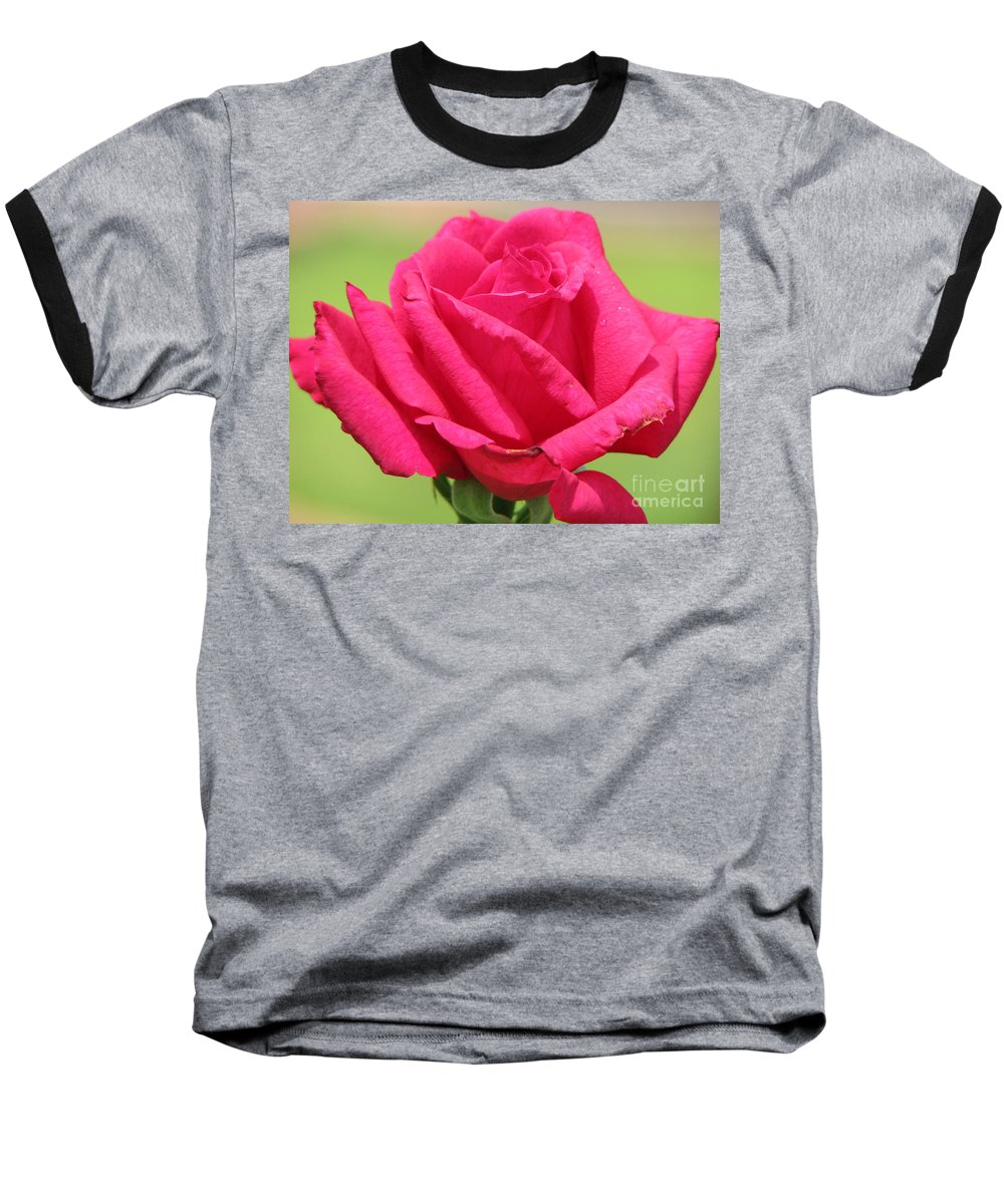 Roses Baseball T-Shirt featuring the photograph The Rose by Amanda Barcon