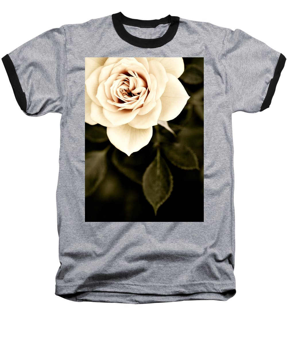 Rose Baseball T-Shirt featuring the photograph The Softest Rose by Marilyn Hunt