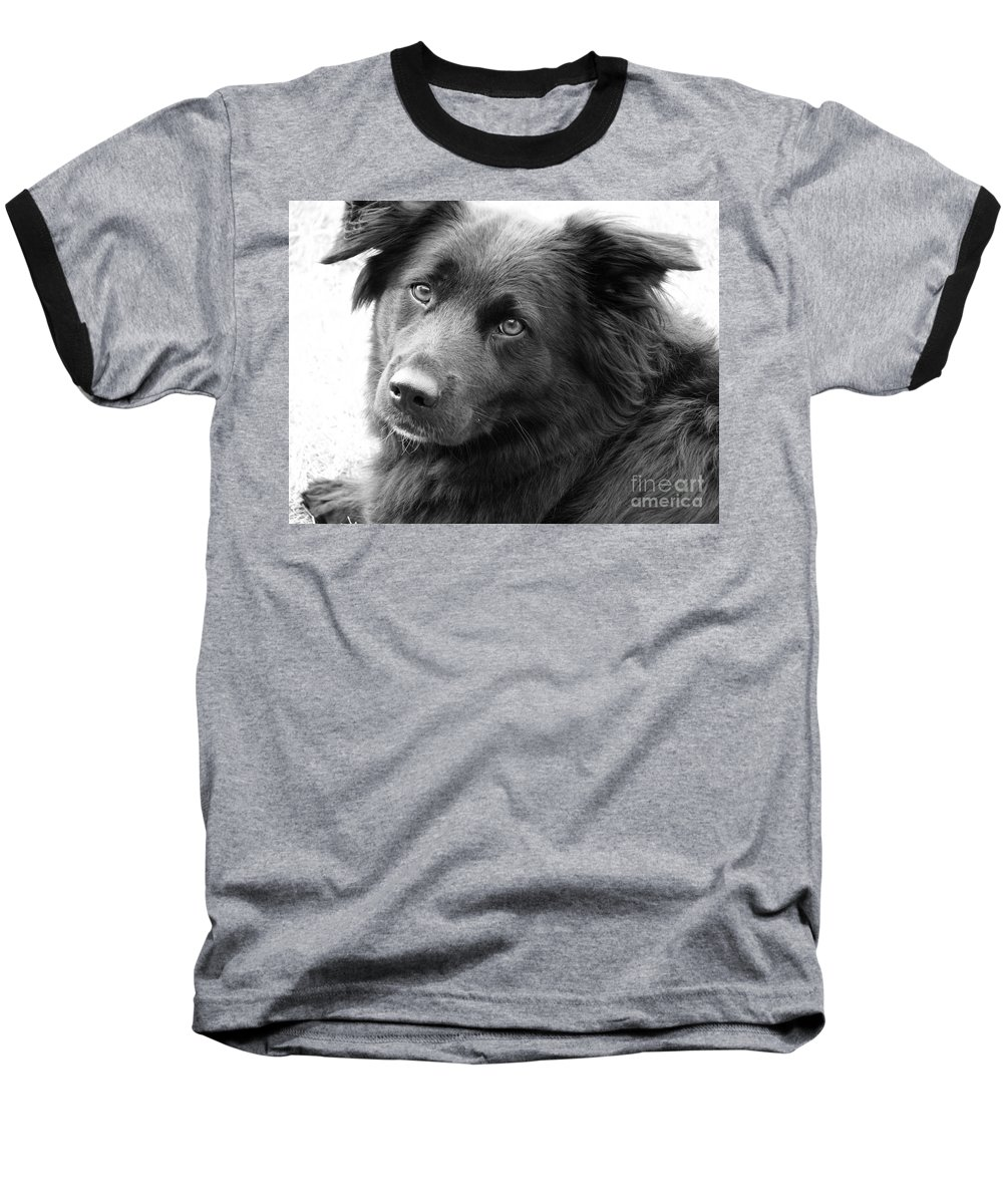 Dog Baseball T-Shirt featuring the photograph Thinking by Amanda Barcon
