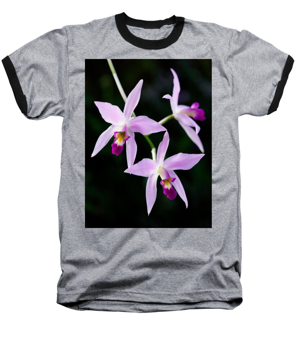 Orchid Baseball T-Shirt featuring the photograph Three Orchids by Marilyn Hunt